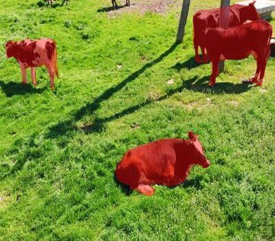 annotation-for-livestock-segmentation