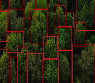 annotation-for-tree-identification1-bounding-box2