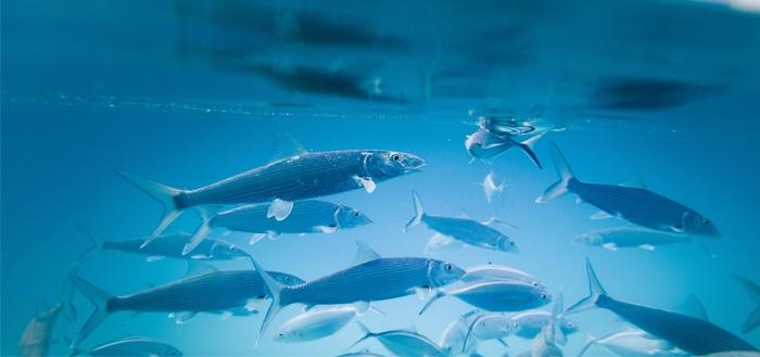 For Aquaculture